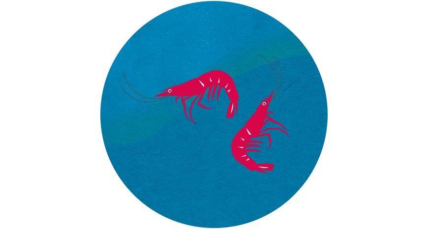 生態養殖蝦多半與不同魚種混養,有助維持水中生態平衡與水質 圖/國立臺灣博物館《2...
