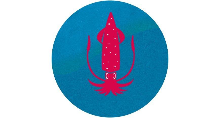 在《台灣海鮮選擇指南》裡,透抽屬於綠燈等級的永續食材,且不需使用具破壞力的底拖漁...