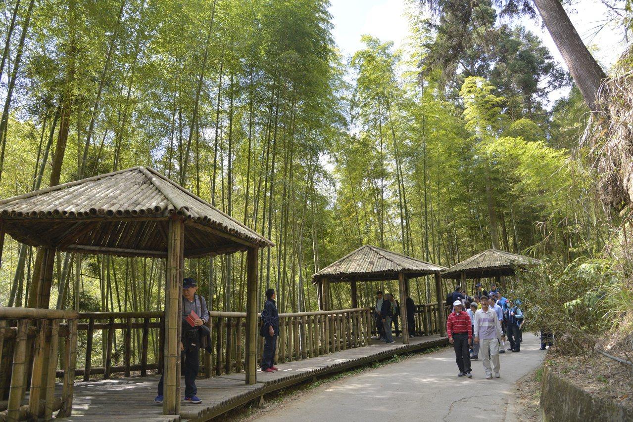 草嶺五元兩角也成為長青族健行淺旅遊的熱門路線。 圖/雲林縣府提供