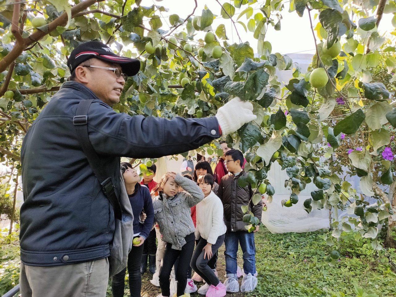 南投縣國姓鄉蜜棗產季到,今年氣候適宜,質量大躍進。 圖/賴香珊 攝影