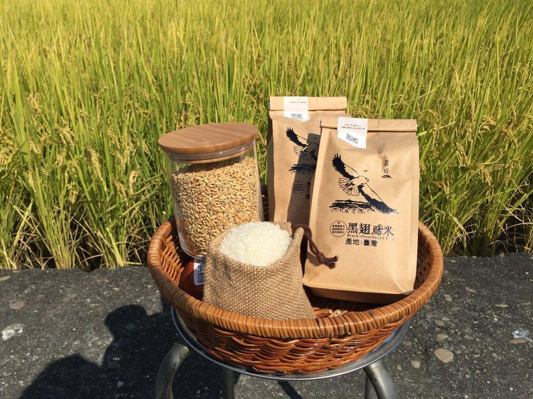 黑翅鳶米。 圖/馬建安提供