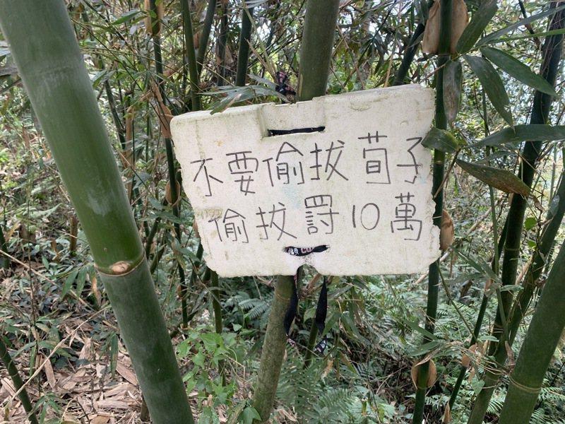 南投縣有農民在竹林裡掛上標牌警告宵小,但因筍、荀兩字分不清,而把古人給拖下水。圖/讀者提供