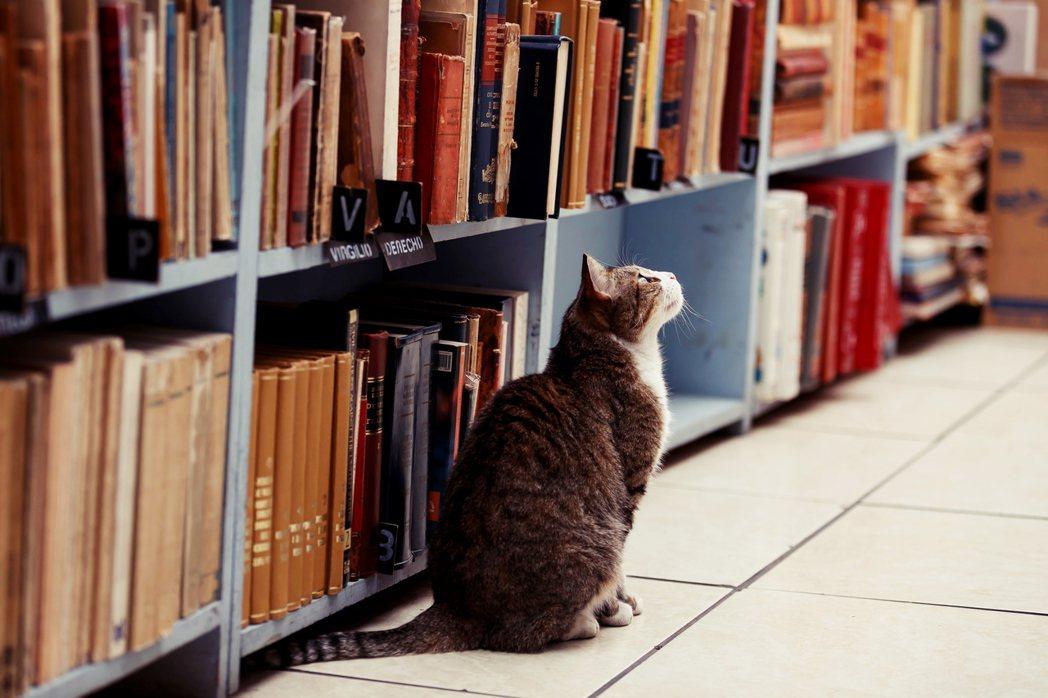 「這裡有一批很純的好書,不讀嗎?」圖為墨西哥的舊書店與店裡的貓貓。 圖/歐新社