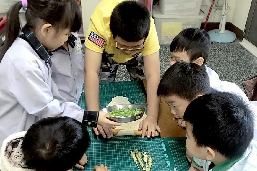 學生將自己種的小麥磨粉製成蔥油餅。 圖/廖肇瑞提供