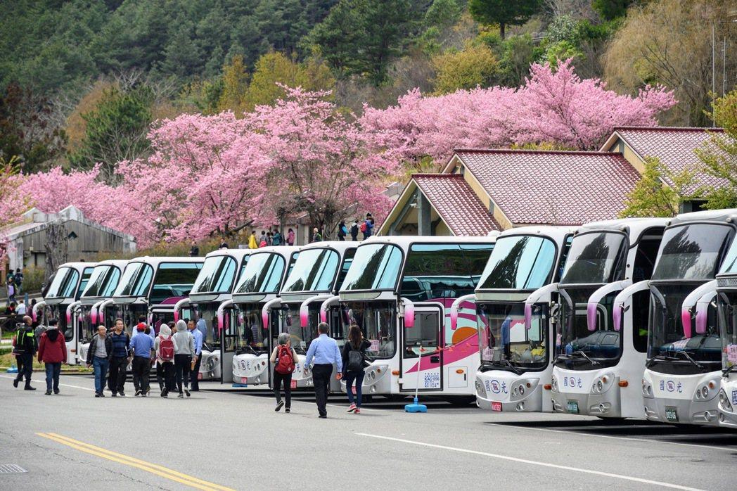 今年武陵農場櫻花季預計自2月12日展開,國光客運賞櫻專車預售比去年成長二成。 圖...