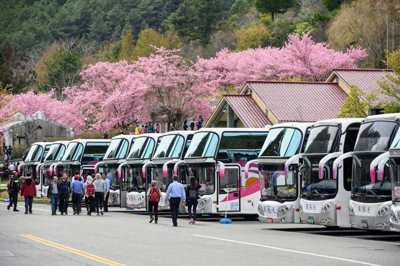 今年武陵農場櫻花季預計自2月12日展開,國光客運賞櫻專車預售比去年成長二成。 圖/國光客運提供