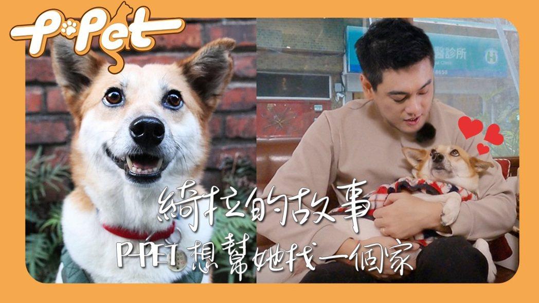 朱孝天對流浪動物很有愛心。圖/ NNY network提供