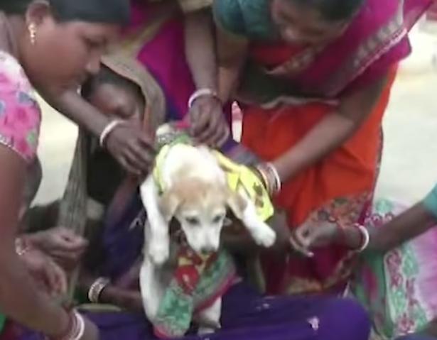 狗狗看起來不是很開心。 圖擷自KNews Odisha YouTube