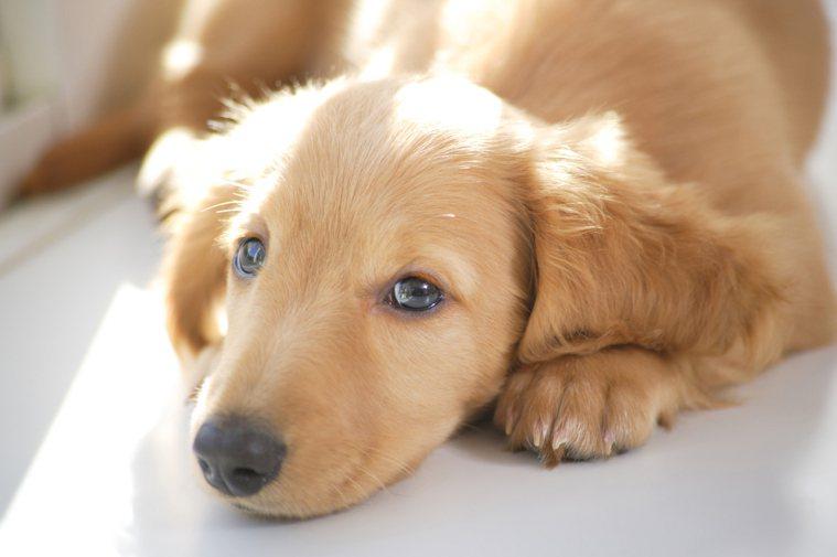 對許多飼主來說,毛小孩不僅是寵物,也是重要的家人。 圖片來源/ingimage