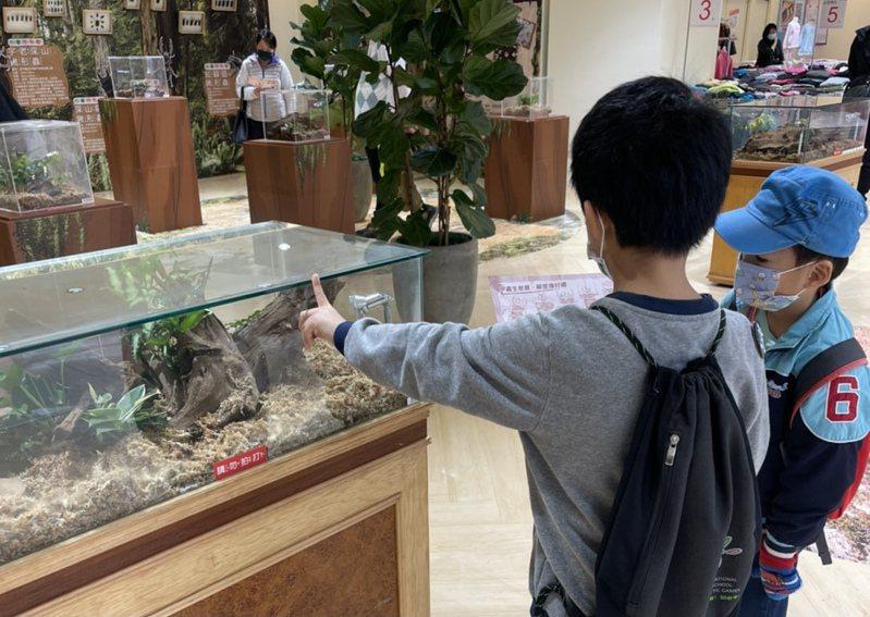 新竹SOGO今年與雕虫小技甲蟲自然教室合作,首度舉辦甲蟲生態展於3樓活動會館展出。圖/新竹SOGO提供
