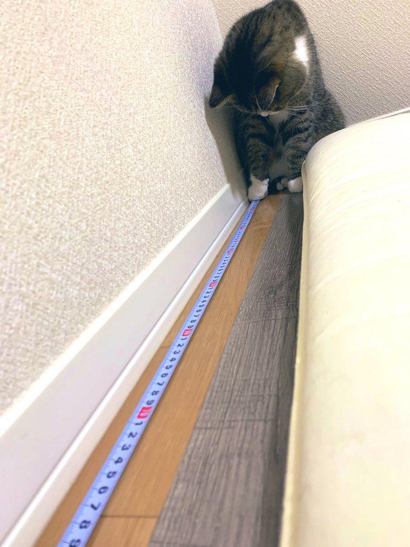 一位日本網友想要測量自家床鋪,意外獲得「貓手」幫忙。圖擷取自twitter