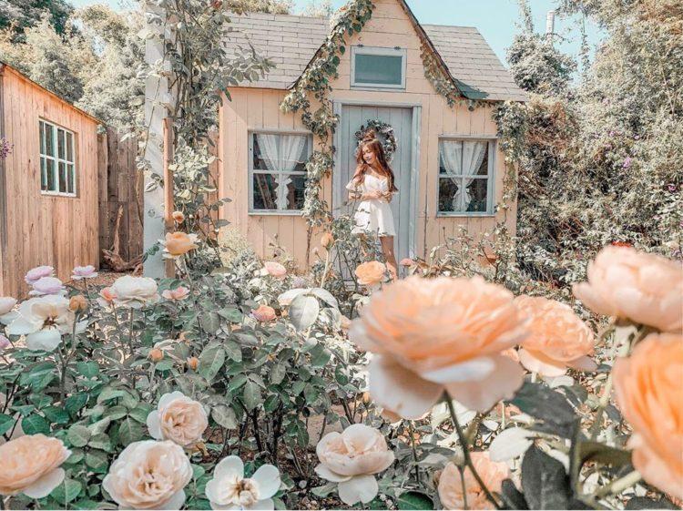 玫瑰山谷雖然佔地不廣,但外觀像座城堡,園內種植了滿園的玫瑰,花園側邊的歐風小木屋...