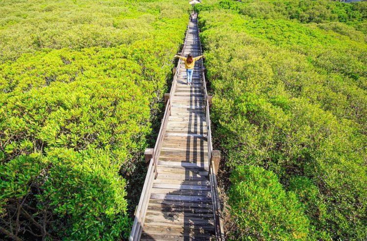 綠葉如茵、樹海壯觀是新豐紅樹林生態保護區最好的形容詞。 圖/IG@sky_kue...