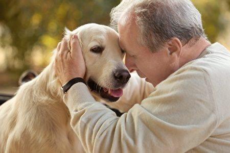 無論在電影或是現實生活中,狗都是人類最好的朋友。  圖/pixbay
