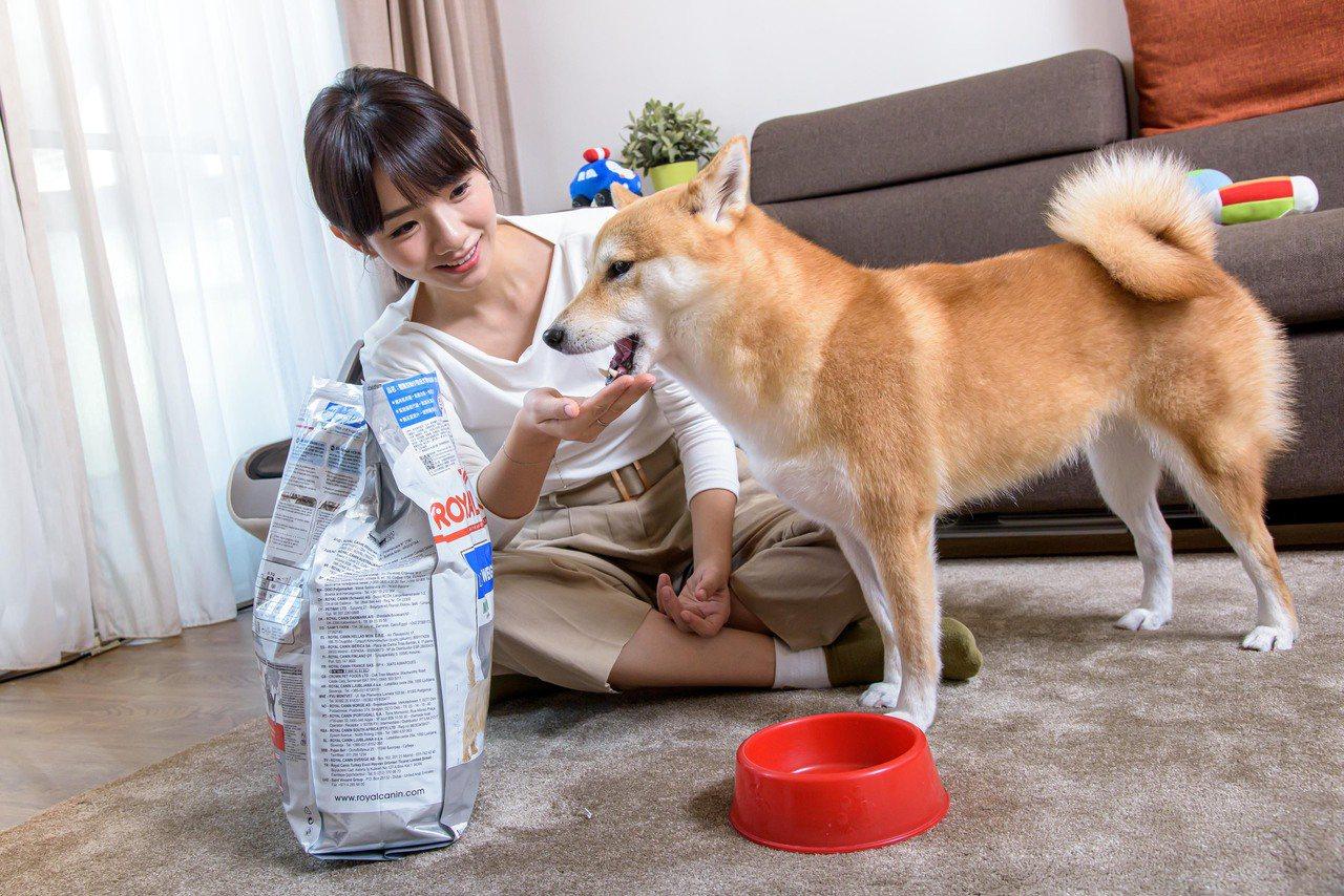 圖說:瑞典研究指出,養狗能減輕壓力,降低心血管疾病風險。 圖/吳彥鋒 攝影