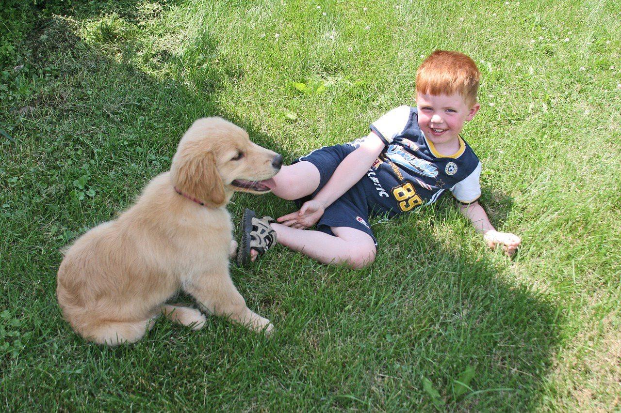 領養不棄養,陪伴狗狗健康成長,是一件非常有意義的事。 圖/pixbay