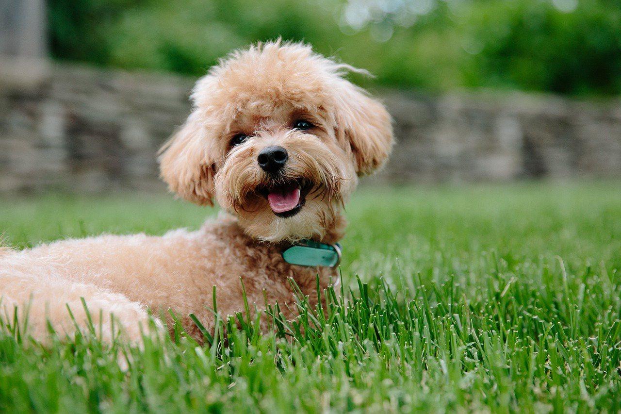 選擇大品牌、適口性佳、精準研發的營養配方,更能照護狗狗的健康。  圖/pixb...