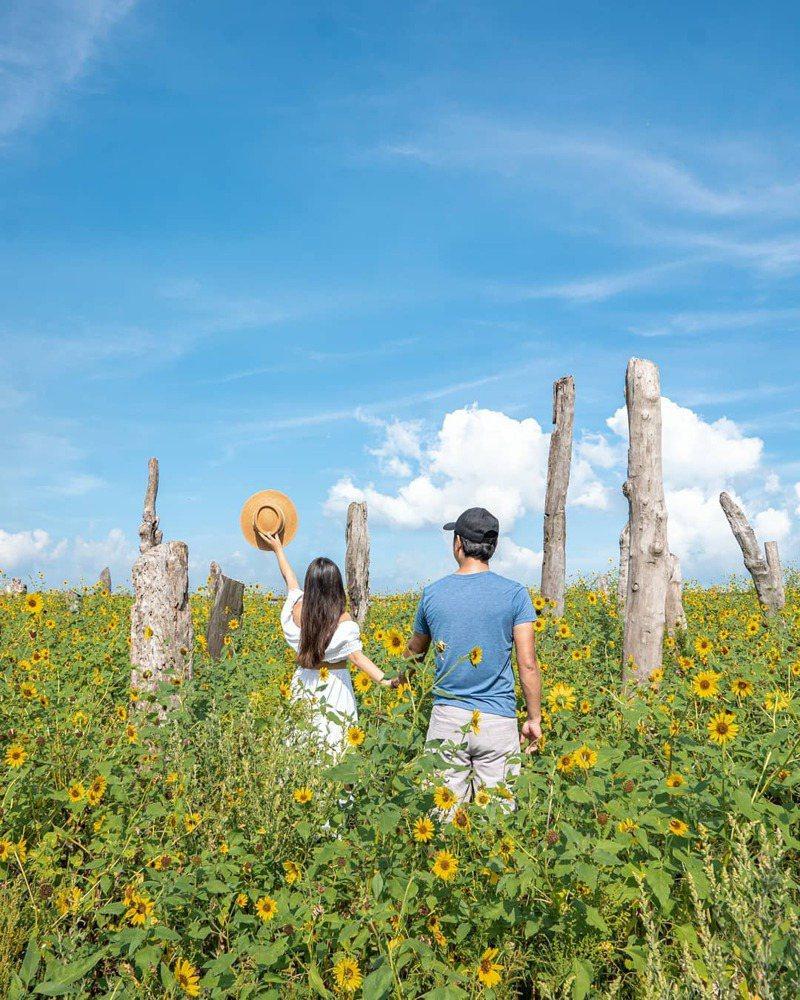 ▲中部過年走春景點-彰化福寶濕地。(圖/sky09190, Instagram)