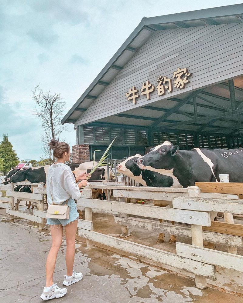▲中部過年走春景點-雲林千巧谷牛樂園牧場。(圖/oio_0102, Instagram)
