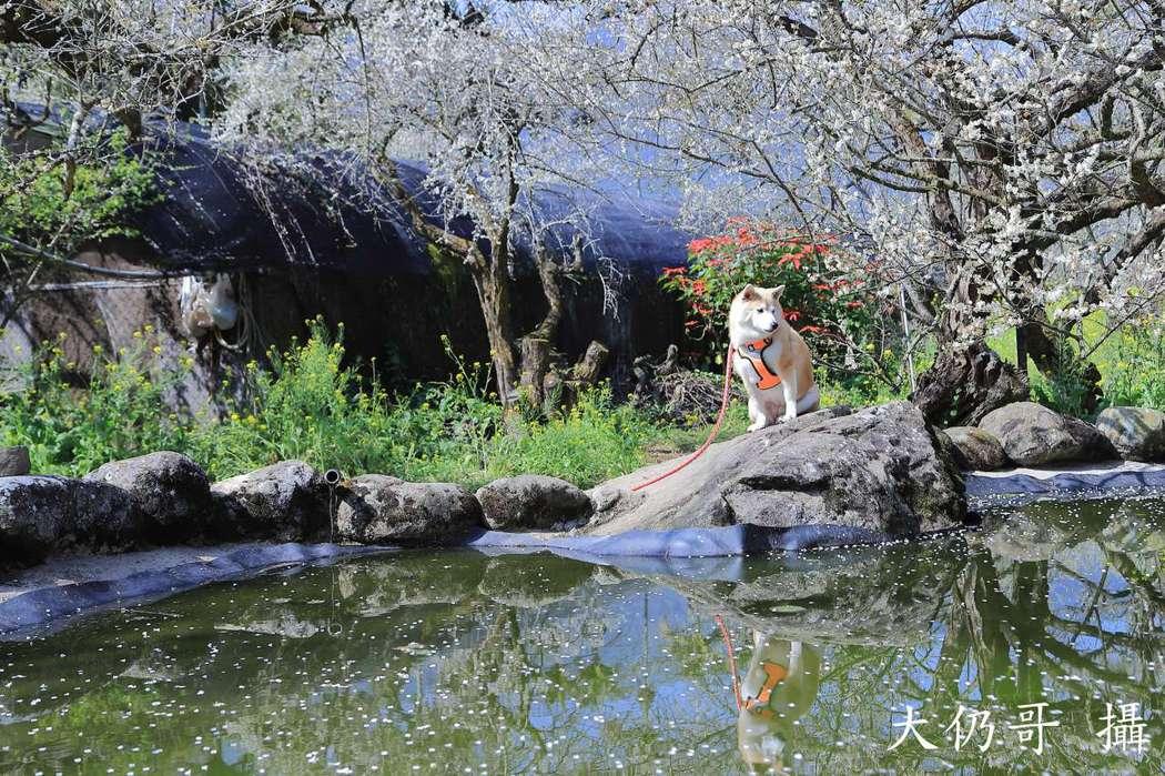 01.石家梅園內的水池