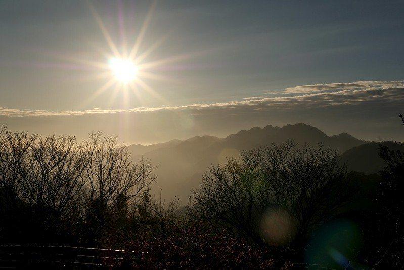 日落 (幾棵高大的台灣本土山櫻花,花苞已長滿準備接棒)