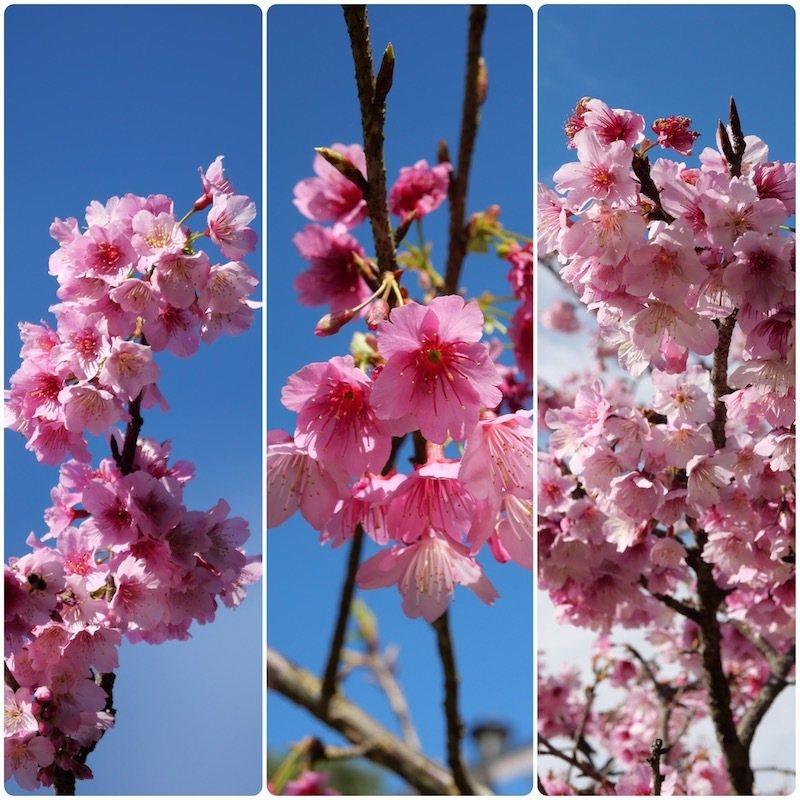 上午時刻,朵朵花兒綻放,越開越多