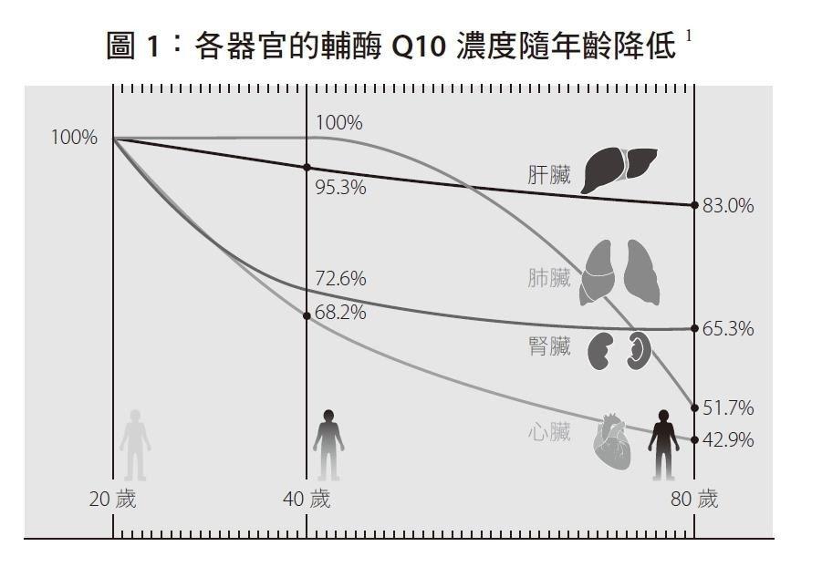 不同器官,老化的速度也不同。我們可以從各主要器官裡的「輔酶Q10含量」來看個別的...