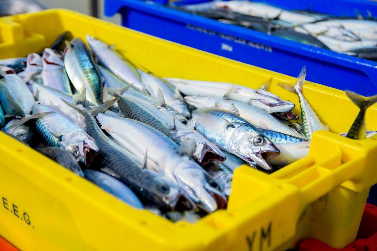 若要透過食物來補充,含有輔酶Q10 的食物包括:鯖魚、沙丁魚、鮪魚、牛肉、牛肝、...