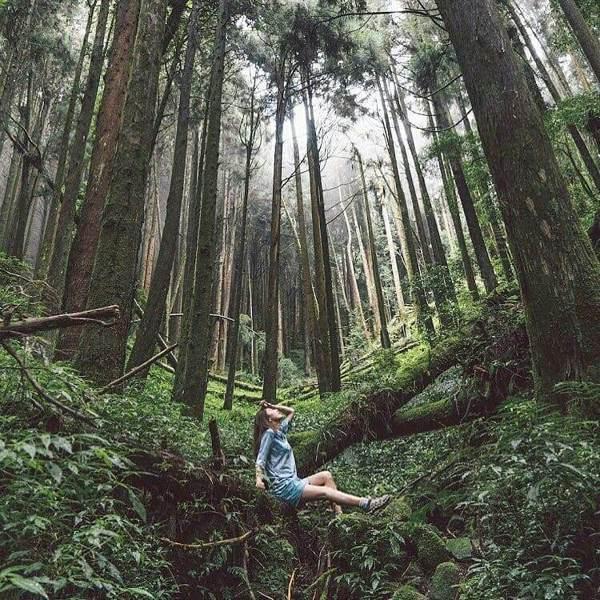沒有人走過特富野古道不稱讚的,林木茂密、古木參天,與枕木相伴的是舊鐵道的回憶。 ...