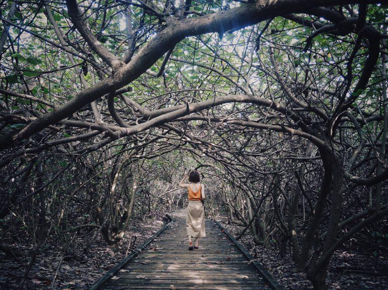 除了別有一番意境的隱藏版枯枝小徑,這裡擁有獨特的地形景觀及豐富的自然資源,能欣賞...