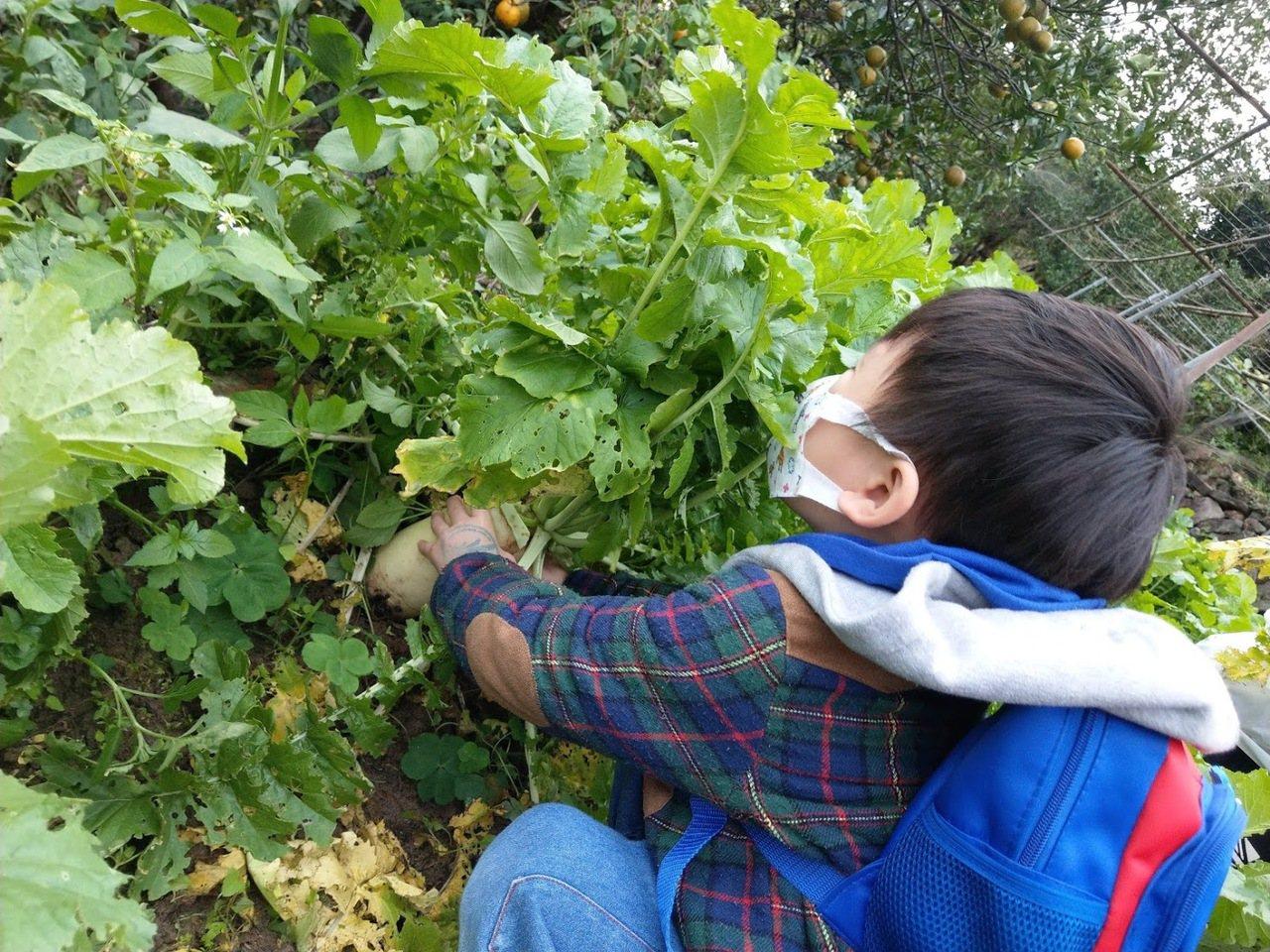 內湖清香農場,除了採草莓還有拔蘿蔔、採香菇等...適合親子同樂。