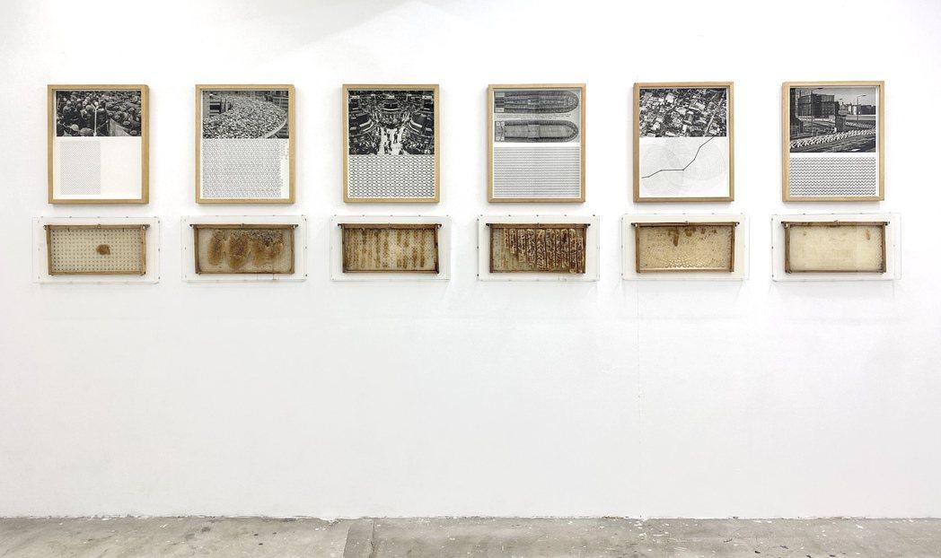 埃爾南德在台展出威尼斯雙年展古巴館代表計畫:「自然的狀態」。圖/路由藝術提供