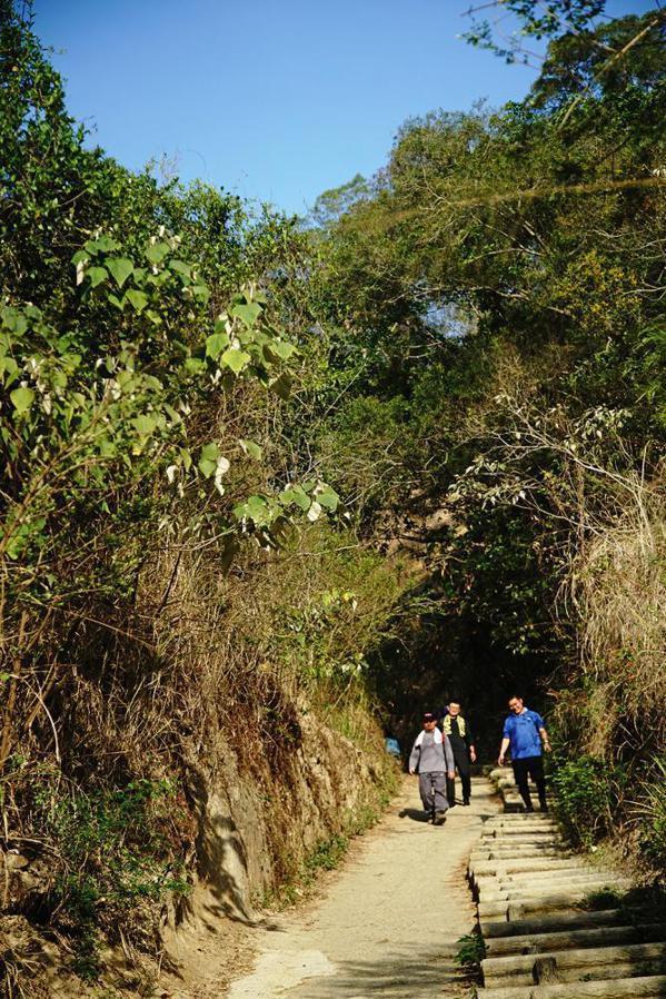 觀音山步道夾道覆蓋綠蔭,清晨來爬山的山友特別多。 圖/曾信耀 攝影