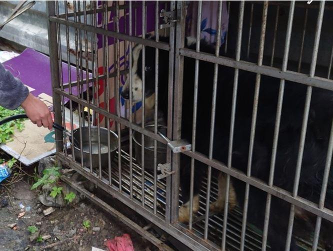 張姓飼主住在蘆洲區巷弄中,長期將邊境牧羊犬飼養在戶外鐵籠中,已被多次陳情不當飼養。圖/新北市動保處提供
