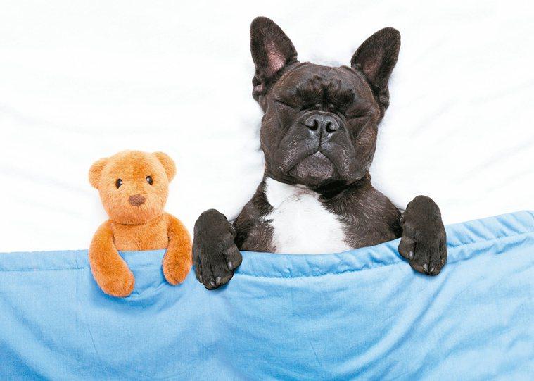 躺下後一、兩分鐘內就昏睡的人,未必擁有良好的睡眠品質,實際上可能是嗜睡和潛在睡眠...