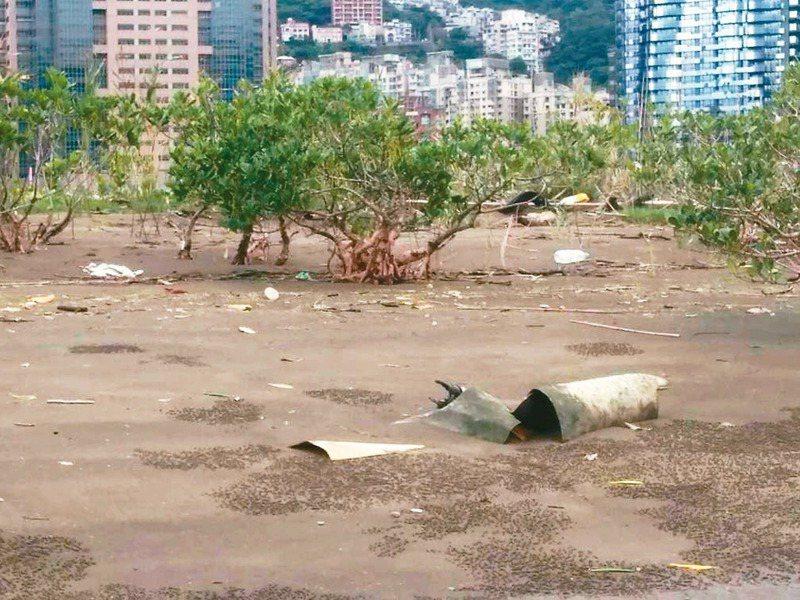 淡水河垃圾順流而下,加上潮汐作用,卡在紅樹林自然保留區中,慘成「垃圾林」。圖/荒野保護協會提供