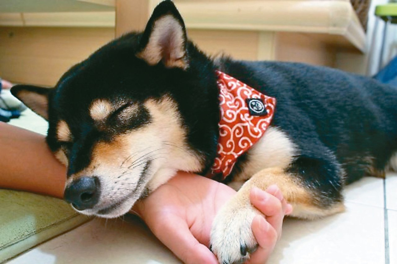 「寵物是沒有全民健康保險的」,如果生病需要就醫,醫療費用也必須納入飼主的評估考量...