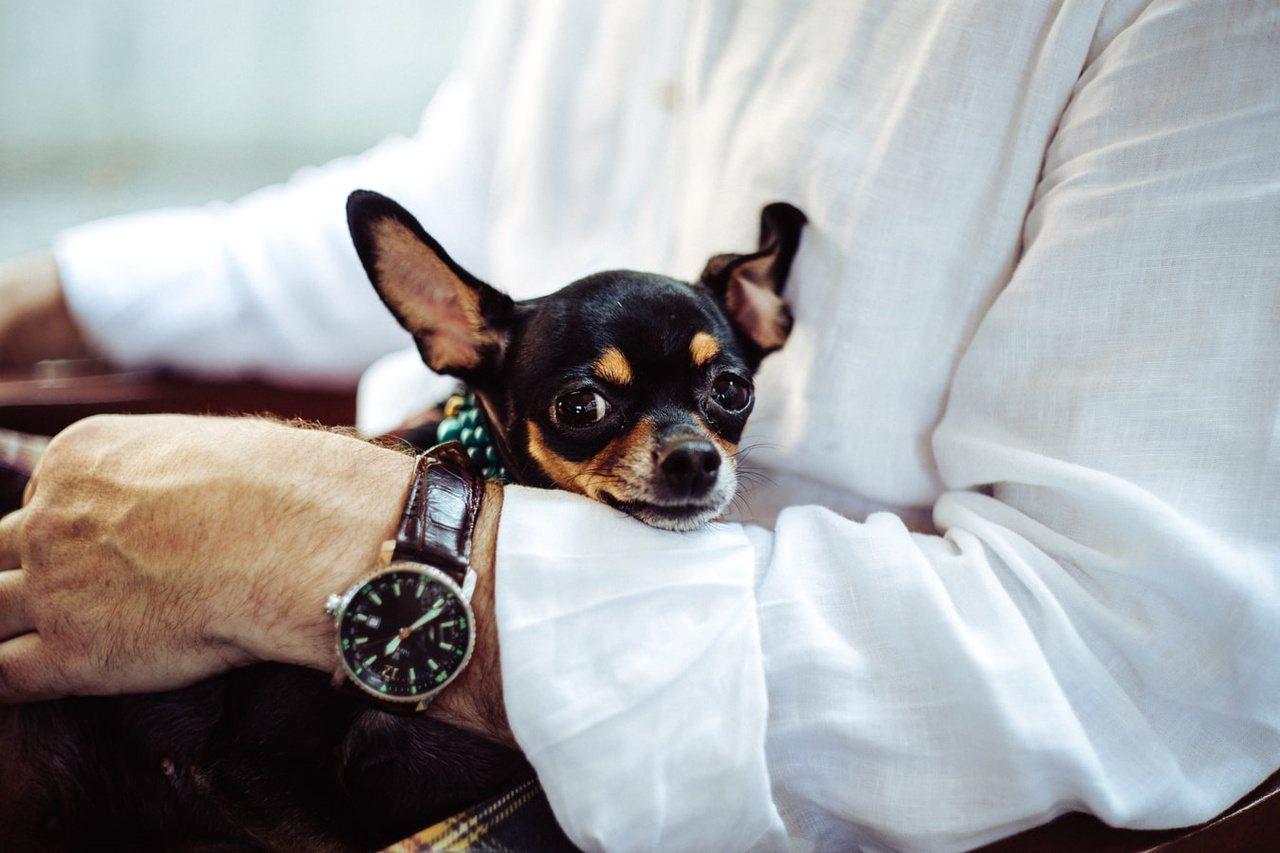 許多研究都顯示,在友善的動物陪伴下,可以降低人內心的緊張與焦慮。 圖/unspl...