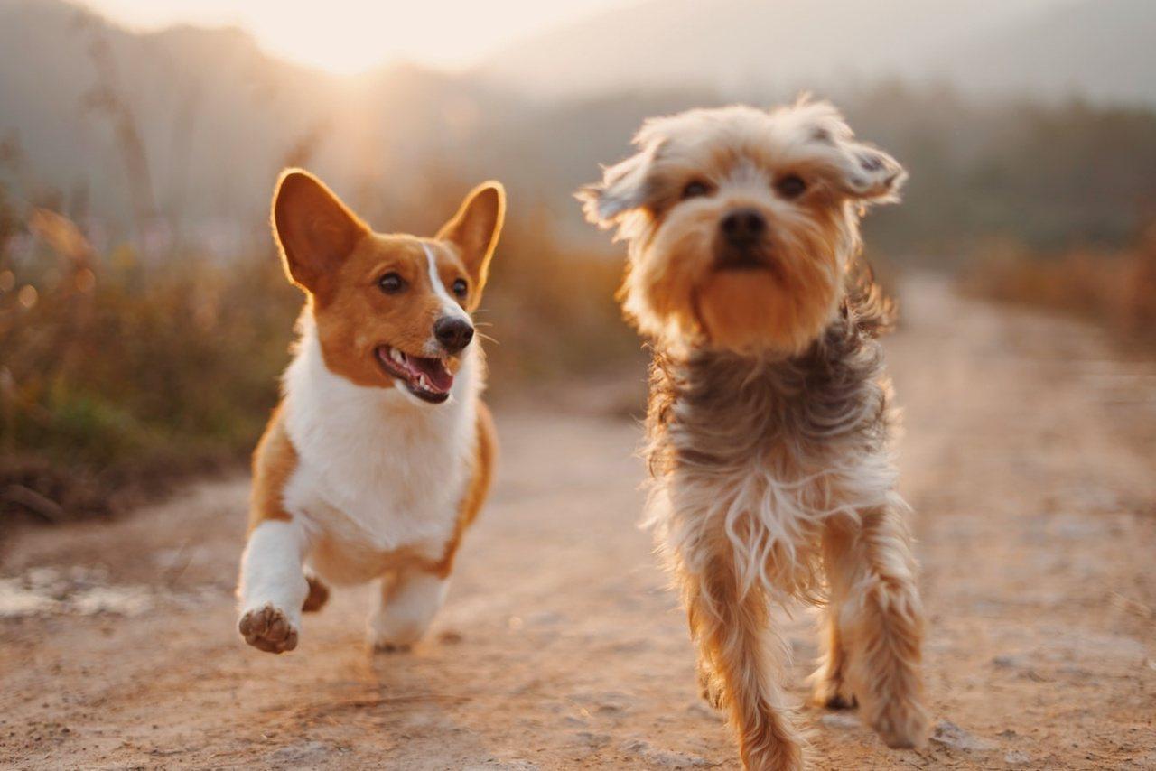 養寵物比較適合常常「窩」在家的長輩,因為有個能驅使他們走出去,強身健體的理由,並...