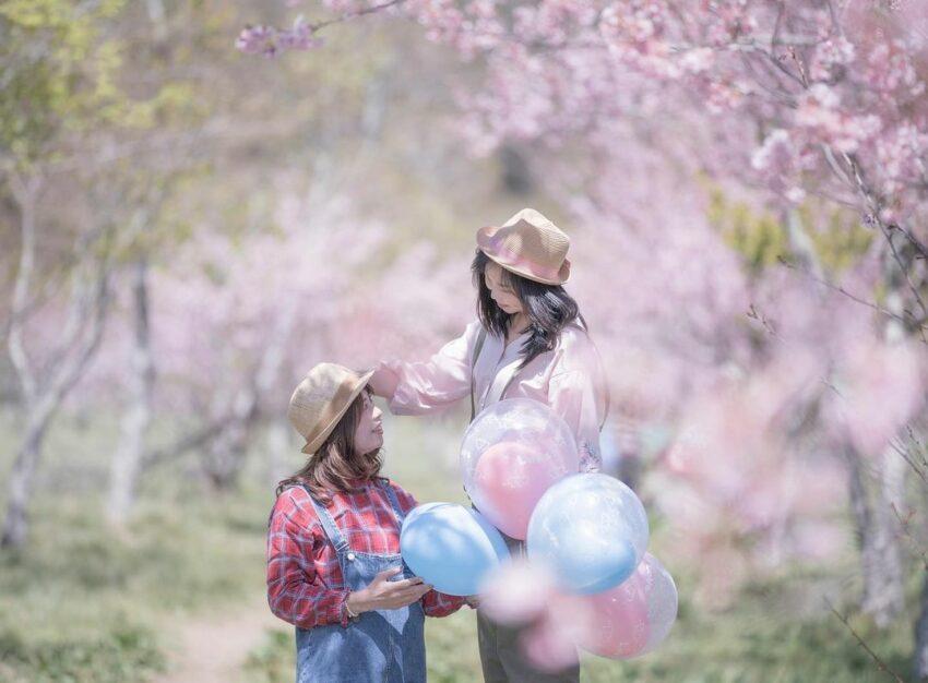 每到櫻花季,武陵農場到處都能看到一片粉紅的夢幻景致 圖/IG @greet_ev...