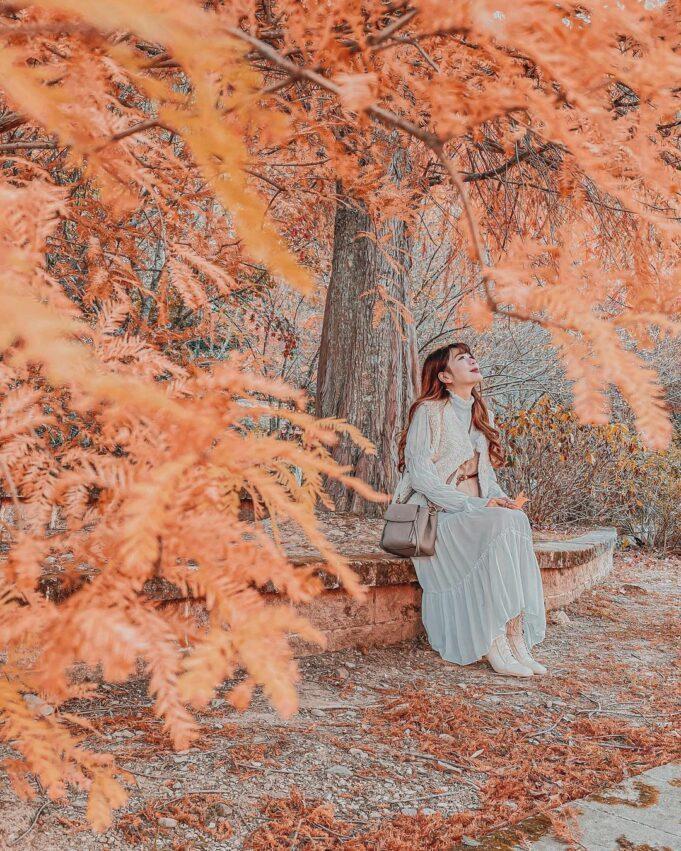 到了秋季,落羽松逐漸轉黃轉紅,變成紅褐色的小枝與葉一同脫落時,猶如飄散的羽毛,因...