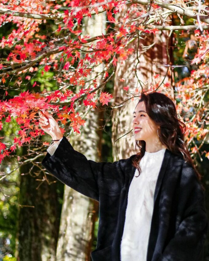 武陵農場園區內處處幾乎都有楓樹和槭樹,主要的楓葉品種包含了「青楓」、「台灣紅榨楓...