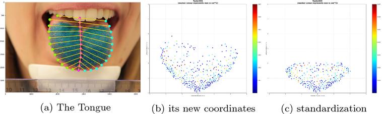 利用人工智能、透過坐標定位方式,分析舌頭上的乳突結構。(圖片來源:丹麥哥本哈根大...