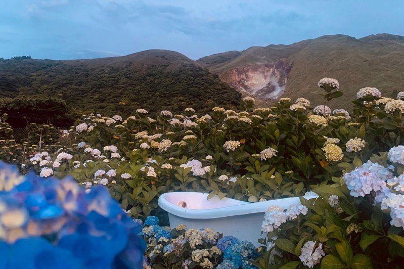 以情境式繡球花拍攝場景的花谷海芋園把白色的歐風浴缸搬到海芋、繡球花田中,讓們能沐浴花海中。(圖片來源:花谷海芋園粉專)