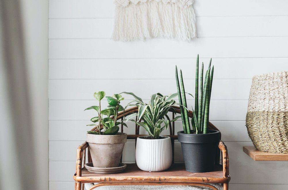 植栽與竹編傢俱能讓整個家帶來放鬆愜意的度假感。 圖/21世紀不動產 提供