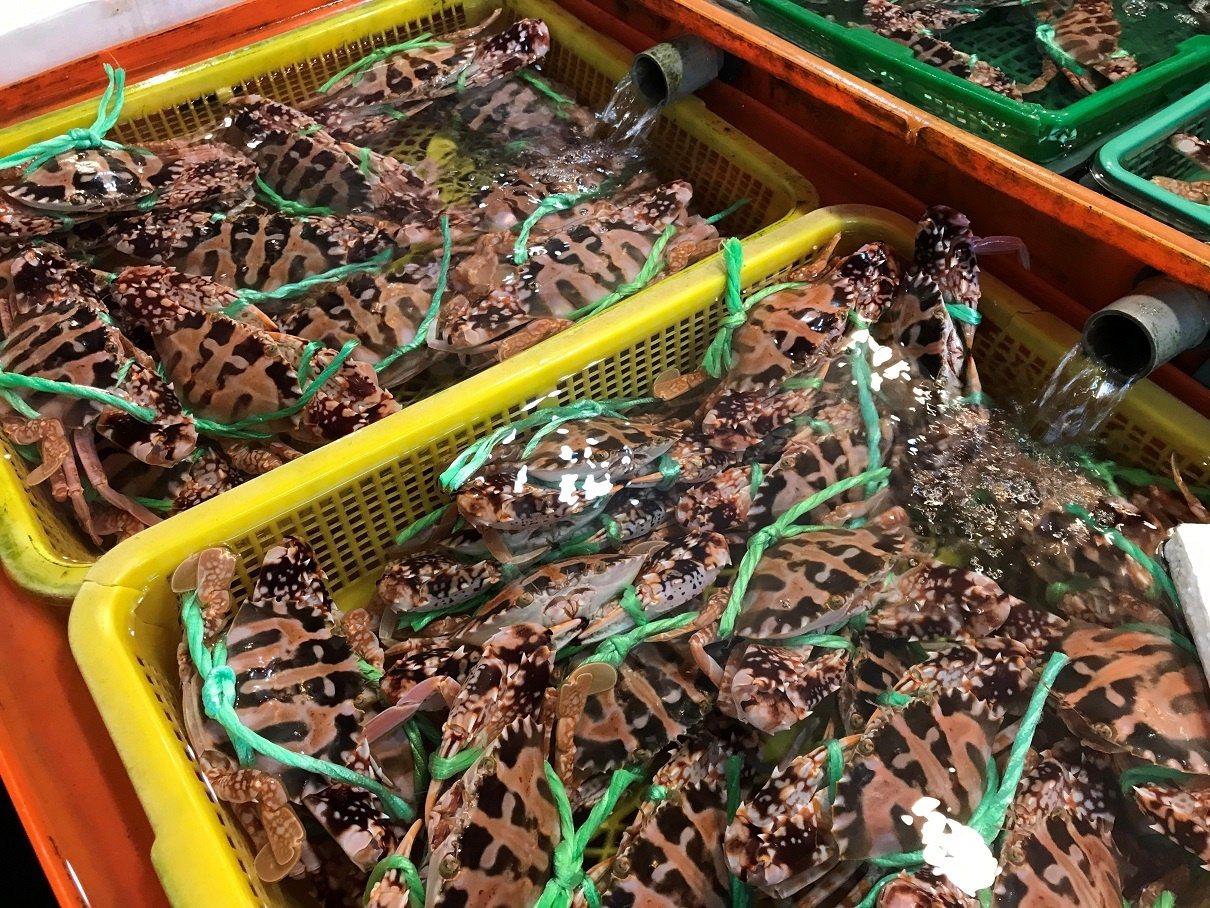 道牛年賀詞,龜吼漁夫市集初一到初五日送20個百元紅包。 圖/新北市農業局提供