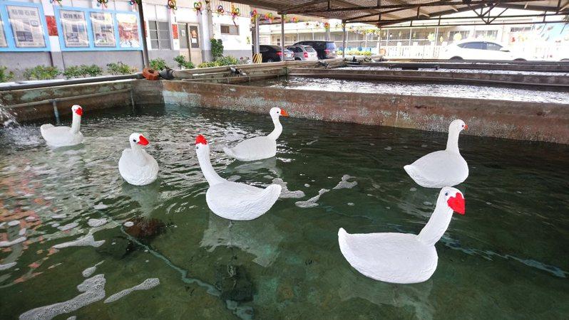 水試所春節期間有「荔枝師─海廢藝術特展」,盧文雄將海廢保麗龍做成白鵝,相當可愛,宣導海廢造成汙染及清除的重要性。圖/金門水試所提供