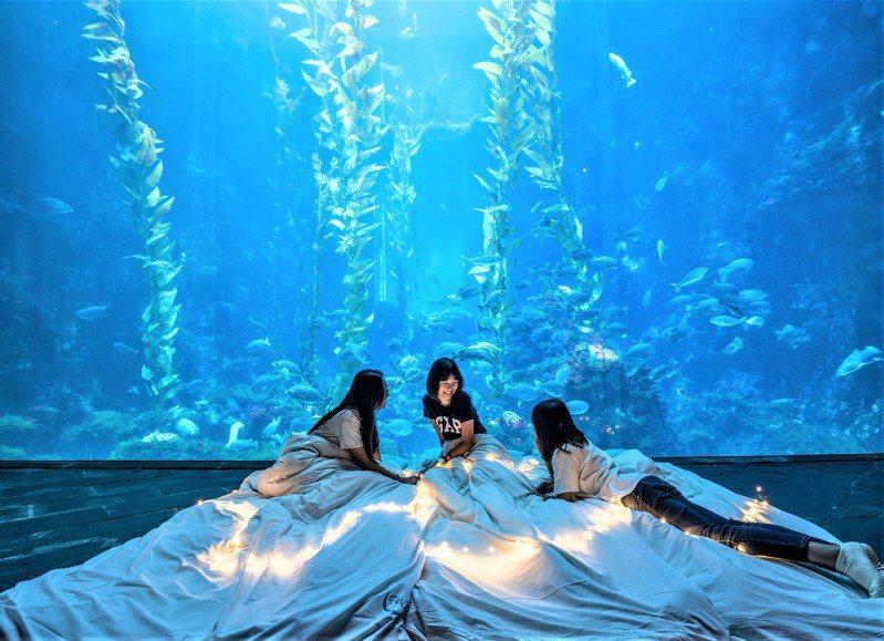 今天是除夕,有百餘個家庭選擇夜宿國立海洋生物博物館,與小白鯨、企鵝、魚兒共眠一起守歲共眠。圖/海生館提供