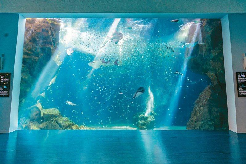 「台灣大水槽」可見到銀鱗鯧魚、雪花鴨嘴燕魟等魚種。 圖/Xpark提供