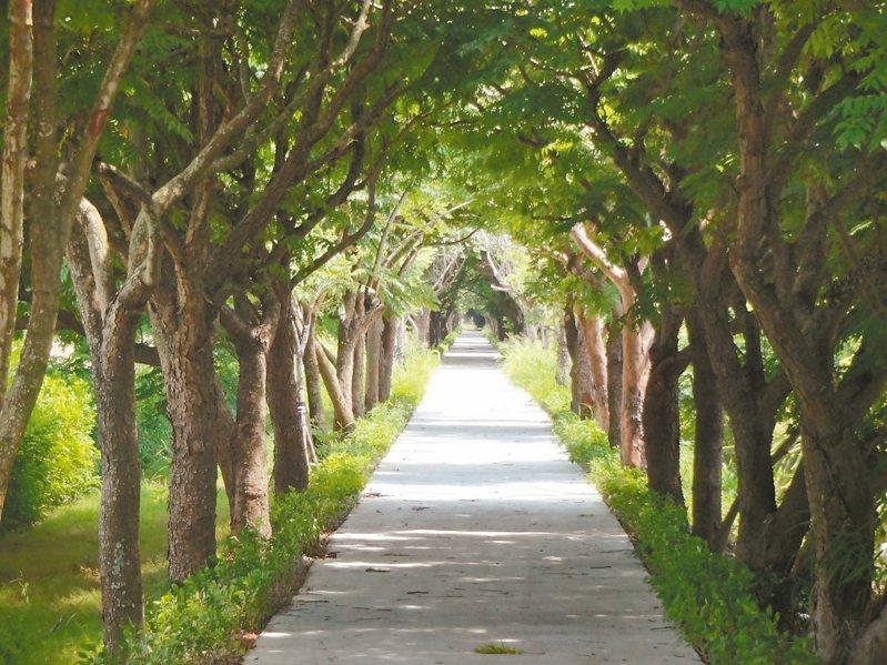 美麗的山海圳綠道被核定為國家級綠道,圖為善化區嘉南大圳南幹級路段。圖/台南市水利局提供